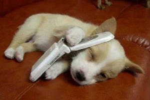funny-pictures-of-dogs-phone-dog.jpg